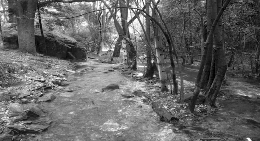 bosque de tlalpan Río
